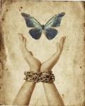 Farfalla e catene